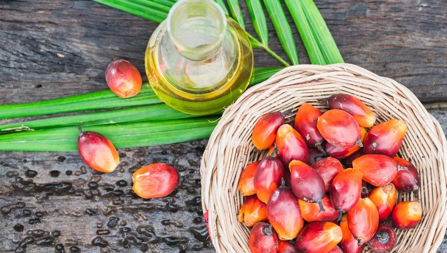 Czym Jest Olej Palmowy I Czy Powinniśmy Go Unikać W Diecie