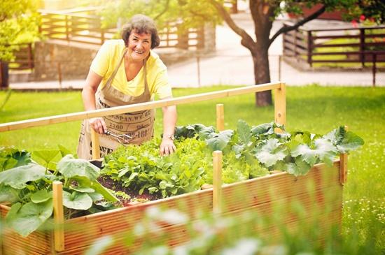 Załóż Własny Ogródek Warzywny Warzywa I Owoce Rodzina Zdrowia